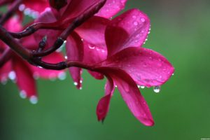Exotic-Flowers-of-the-world-50c6746ead00f_hires