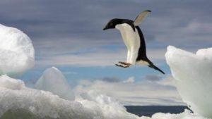 adelie-penguin-jumping-ocean.adapt.470.1