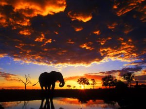 elephant_wallpaper_sunset_hd_3